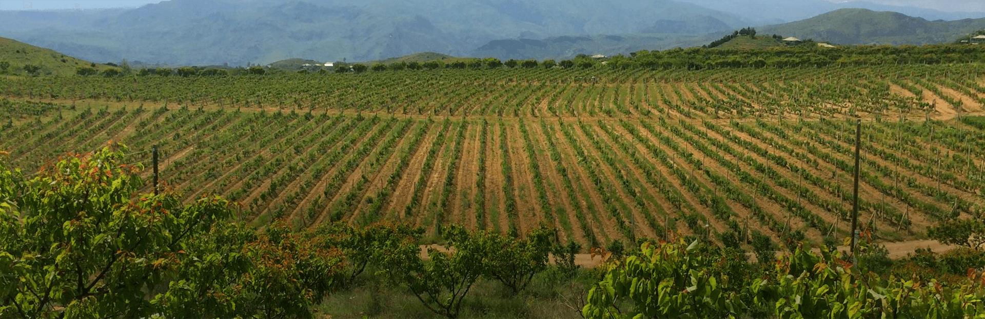 trinity wijngaard