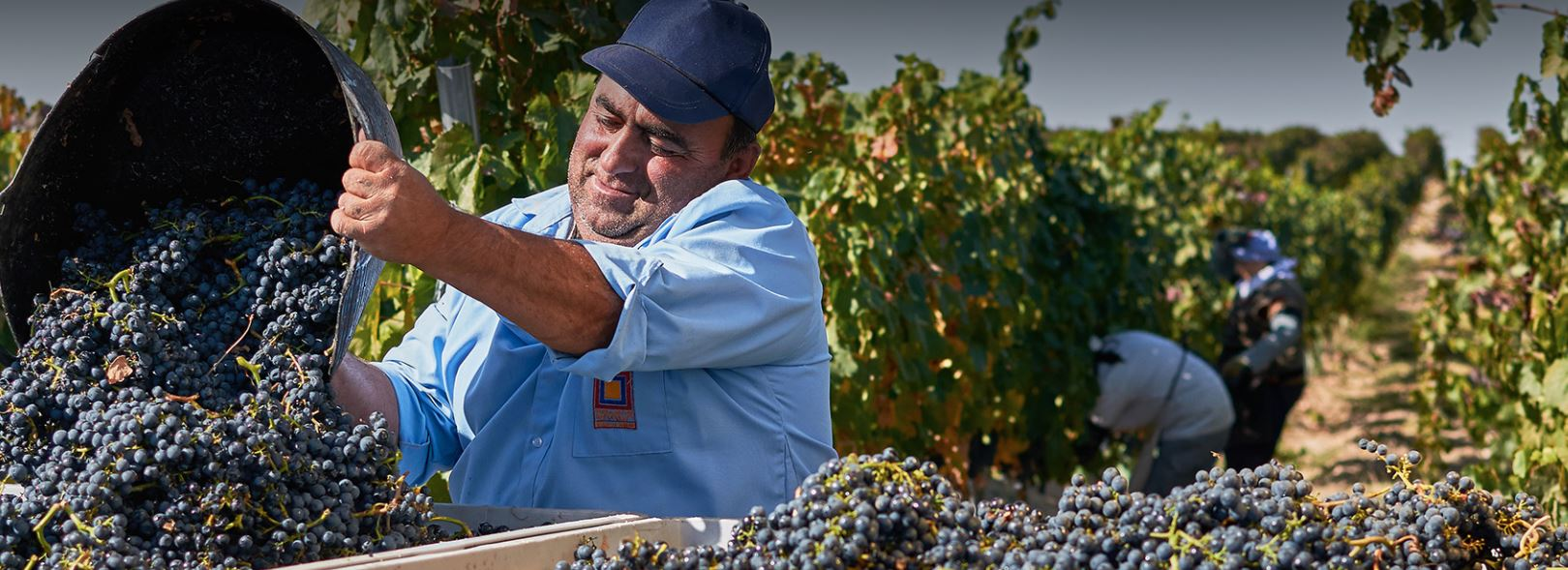 Karas grapes
