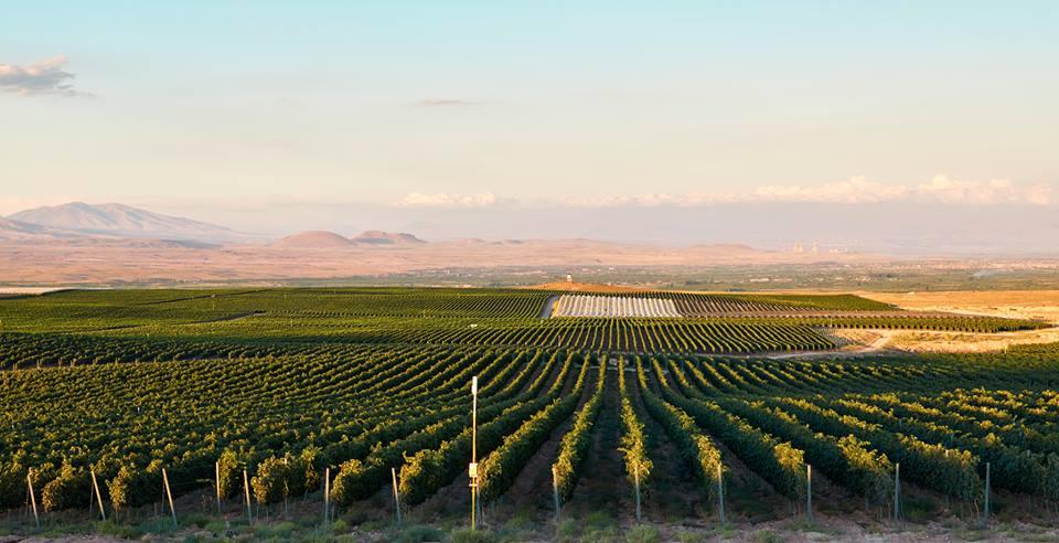 vineyards Karas wines